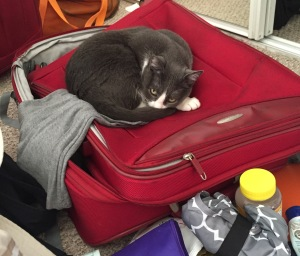 Cat on suitcase